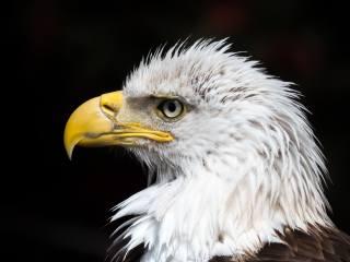 орлан белохвост, фон