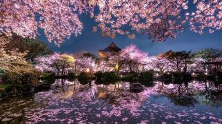 Японія, сакура, ніч, ставок, храм, сад