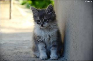 kočka, Тишка