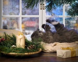 Животное, котенок, детеныш, ветки, ель, елка, игрушка, шар, праздник, Новый год, Рождество, Композиция