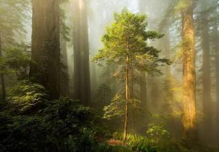 природа, ліс, дерева, папороть, серпанок, туман