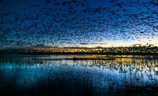 ptáci, SMEČKA, příroda, jezero