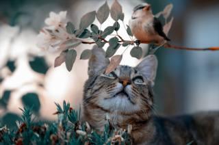 Zvíře, kočka, kočka, pohled, příroda, větvička, listy, ptáček