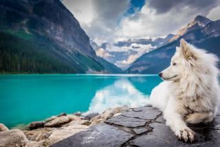 pes, jezero, louise