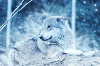 3d, digital art, Animal, predator, wolf, stone, nature, monochrome