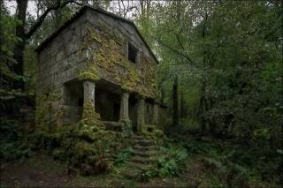 лес, мох, руины