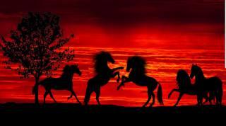 západ slunce, silueta, koně, stádo