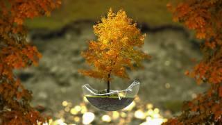 дерево, бонсай, осень