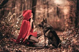little red riding hood, forest, wolf, creative