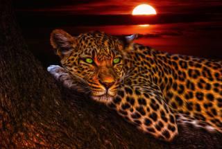 зеленоглазый, леопард, закат солнца