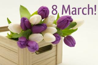 tulips, Items, March 8