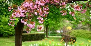 дерево, ветки, парк, весна