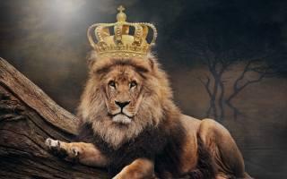lion, king, crown