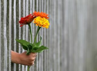 hand, забор.цветы