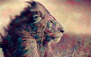lion, art, picture