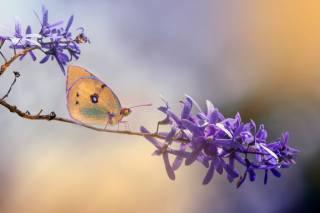Eleonora Di Primo, макро, ветка, цветок, бабочка
