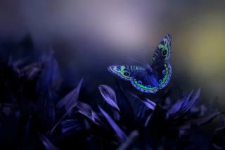 Eleonora Di Primo, макро, листья, бабочка