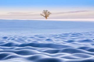 zima, sníh, krajina, strom