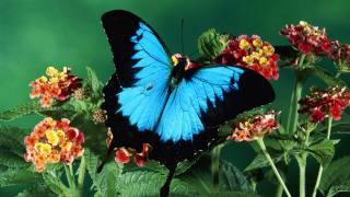 бабочка, цветы, фон