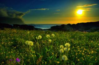 nature, spring, beautiful