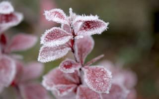 трава, листья, снег, иней, зима, мороз