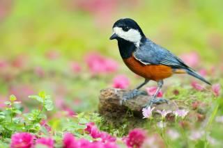 bird, spring, flowers, greens, nature