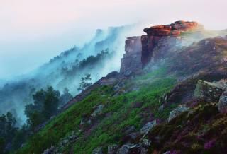 mlha, tráva, ráno, les, hory, svah, květiny, kameny