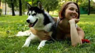 dog, girl, beauty, smile, nature