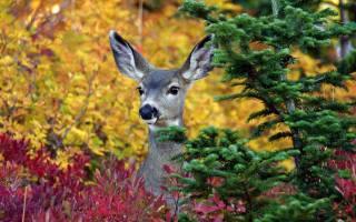 deer, animals, trees