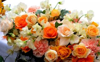 Красочные розы, квіти
