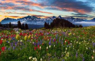 flowers, trees, sunset, nature, the sky, mountains, landscape, clouds