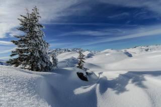 зима, холмы, горы, снег, ели