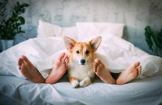 третий лишний, dog, feet