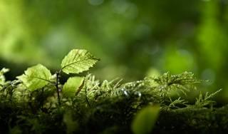 природа, весна, мох, росток, листья, зелень, боке