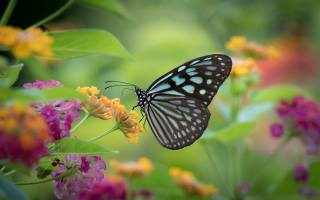 nature, summer, flowers, butterfly, macro