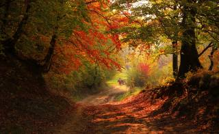 nature, landscape, forest, trees, autumn, road, the wagon