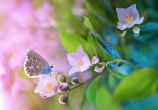 nature, flowers, Bells, buds, leaves, butterfly, macro