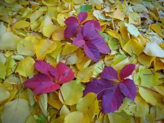November, autumn, gold, November
