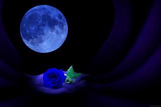 луна, роза, свет