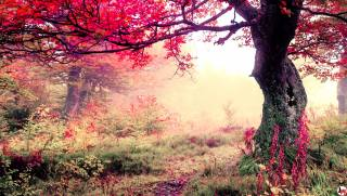 tree, branches, nature, forest, autumn