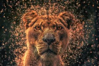 The lioness, muzzle, background, 3d