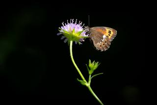 цветок, бабочка, фон