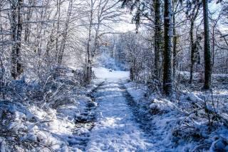лес, ветки, природа, снег