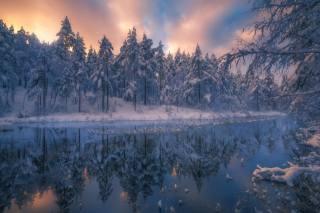 зима, лес, деревья, пейзаж, природа, река, ели, Норвегия, Ole Henrik Skjelstad