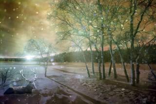 олень, снег, деревья, зима
