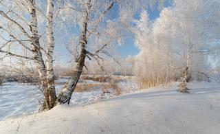 природа, зима, пейзаж, снег, деревья, березы, КУСТЫ