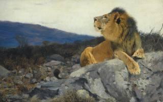 картина, лев, живопись