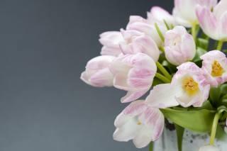 flowers, bouquet, tulips