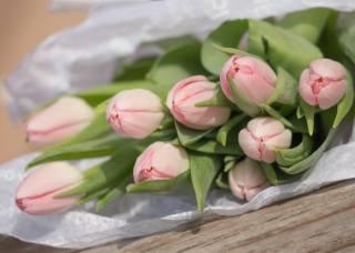 Board, flowers, tulips, bouquet, paper