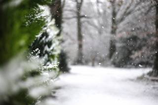 природа, деревья, ветки, туя, зима, снег